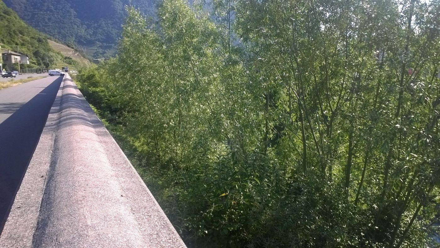 Letto del fiume poschiavino coperto dalle piante foto - Letto di un fiume ...