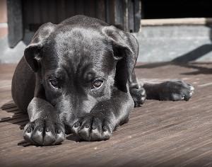RICERCA E SPERIMENTAZIONE, DAL CONSIGLIO REGIONALELA PRIMA LEGGE PER TUTELA ANIMALI